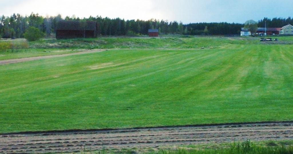 gräs buckarby (2)